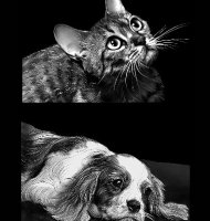 Животные-Б