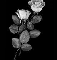 Цветок-Ж