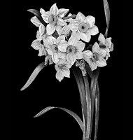 Цветок-Щ