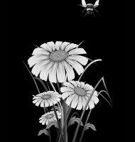 Цветок-Ы1
