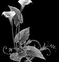 Цветок-Е1