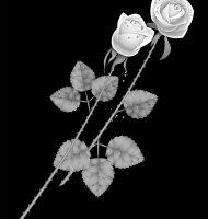Цветок-К2