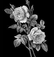 Цветок-С