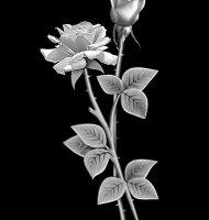 Цветок-Б2