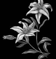 Цветок-У1