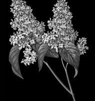 Цветок-М