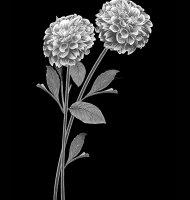 Цветок-Т