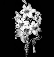 Цветок-Ш