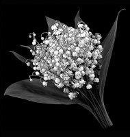 Цветок-Ц