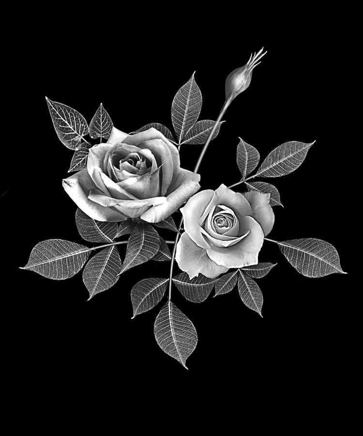 Цветок-Б