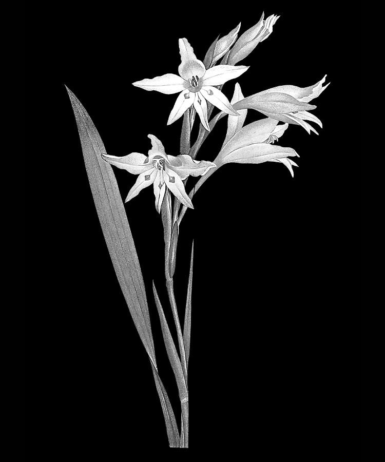 Цветок-М1