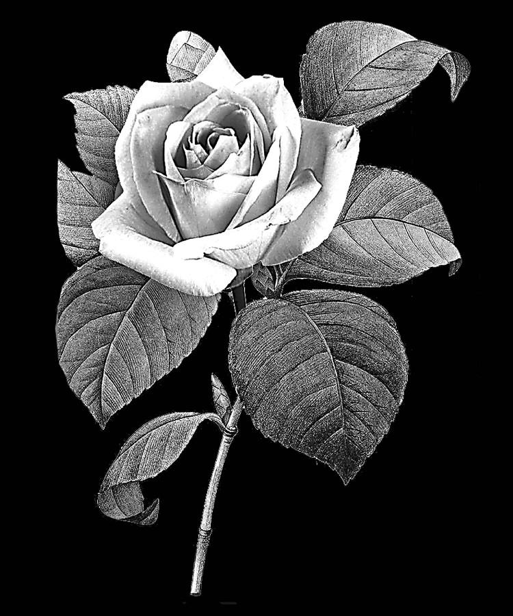 Цветок-Н2
