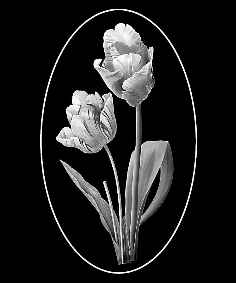 Цветок-П2