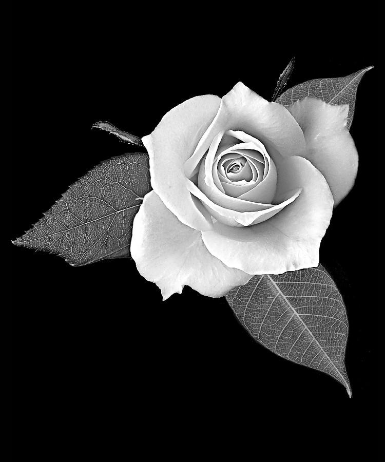 Цветок-Ш1