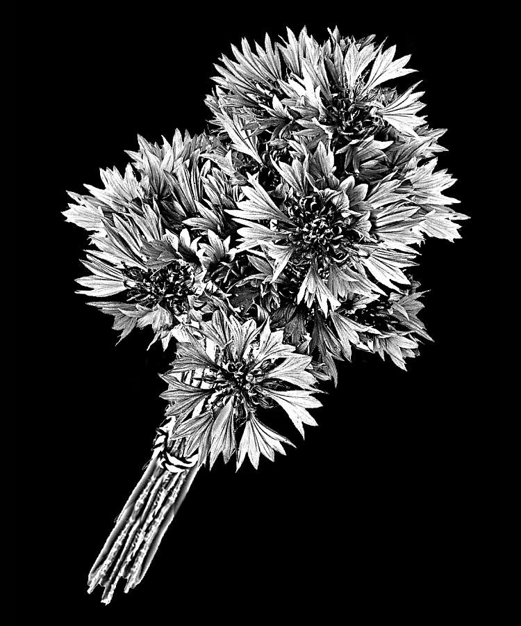 Цветок-З