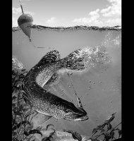 Рыбалка-Б
