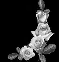 Цветок-З1